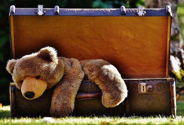 plyšový medvěd v kufru