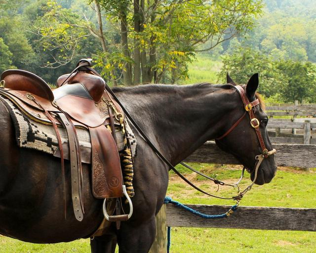 Kůň u ohrady